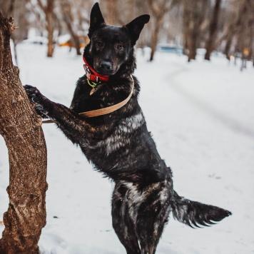 Тайгер - Собаки в добрые руки