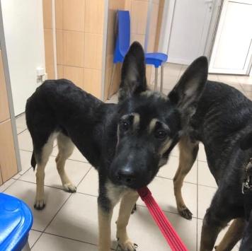 Рэм и Соня - Собаки в добрые руки