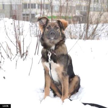 Фидель - Собаки в добрые руки