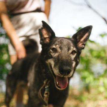Дозор - Собаки в добрые руки