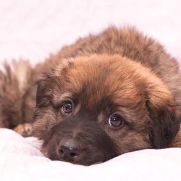 Арчи и Маша - Собаки в добрые руки