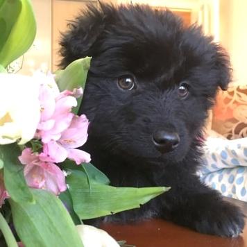 Анастасия - Собаки в добрые руки