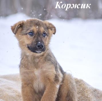 Коржик - Собаки в добрые руки