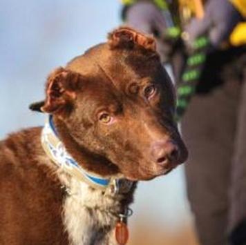 Осман - Собаки в добрые руки