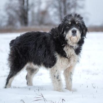 Бося - Найденные собаки
