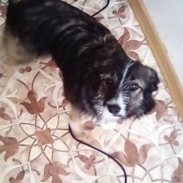 Карамель - Собаки в добрые руки