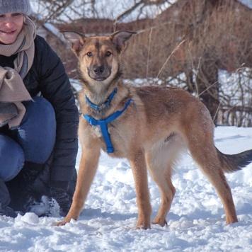 Шесть щенков - Собаки в добрые руки