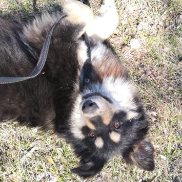 Альтаир - Собаки в добрые руки