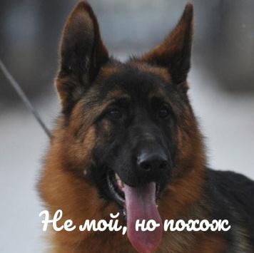 Грэй - Пропавшие собаки