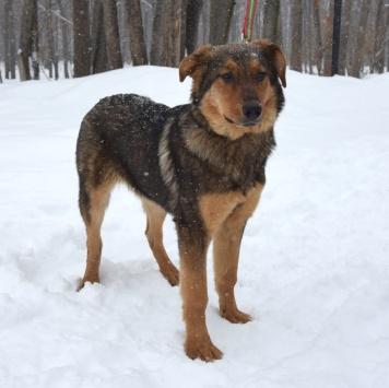 Уля - Собаки в добрые руки