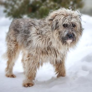 Золтон - Собаки в добрые руки