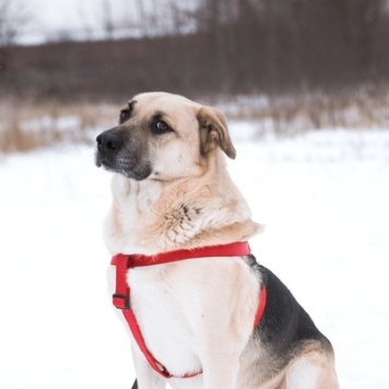 Шуруп - Собаки в добрые руки