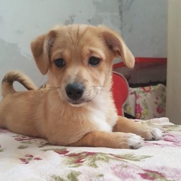 Пиня - Собаки в добрые руки