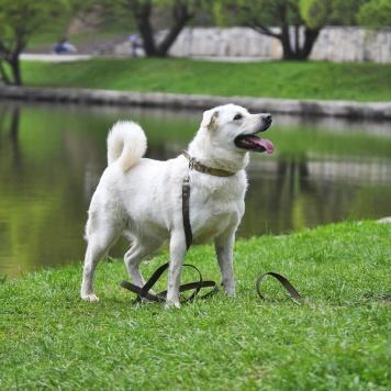 Миледи - Собаки в добрые руки