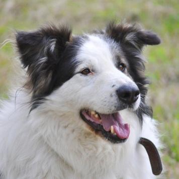 Джой (Бетховен) - Собаки в добрые руки