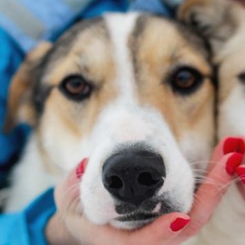 Стэн - Собаки в добрые руки