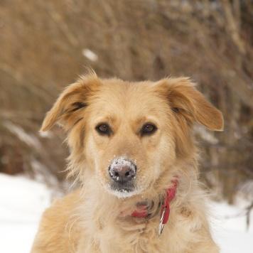 Лада - Найденные собаки