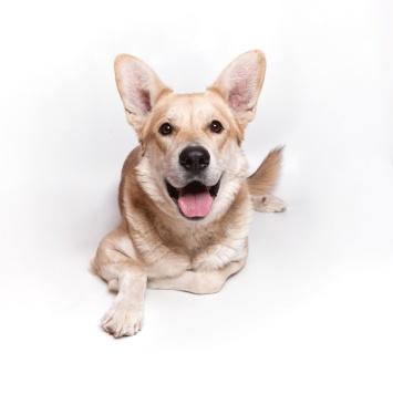 Бьорн - Собаки в добрые руки