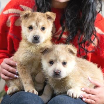Глаша и Ко - Собаки в добрые руки