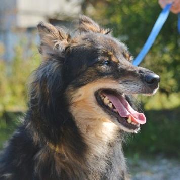 Морс - Собаки в добрые руки