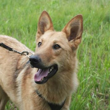Юрма - Собаки в добрые руки