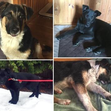 Гоша и Джуличка - Собаки в добрые руки