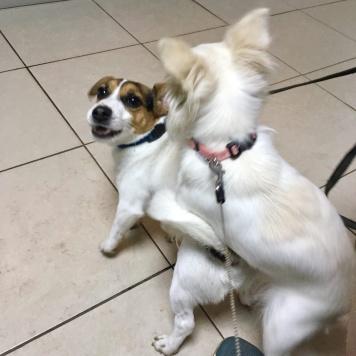 Юкра - Собаки в добрые руки