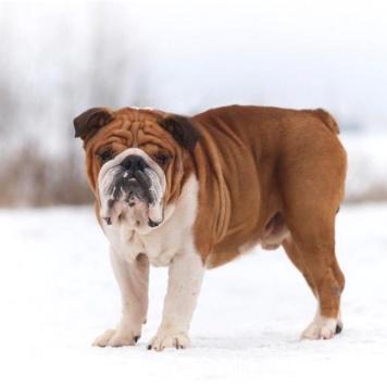 Гарри - Собаки в добрые руки