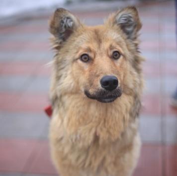 Омега - Собаки в добрые руки