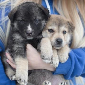 Балли и Бани - Собаки в добрые руки
