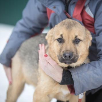 Гризли - Собаки в добрые руки