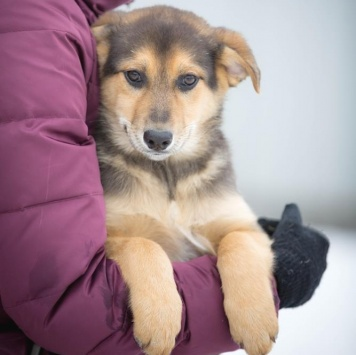 Венди - Собаки в добрые руки