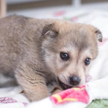 Балли - Собаки в добрые руки