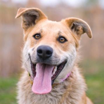 Сенди - Собаки в добрые руки