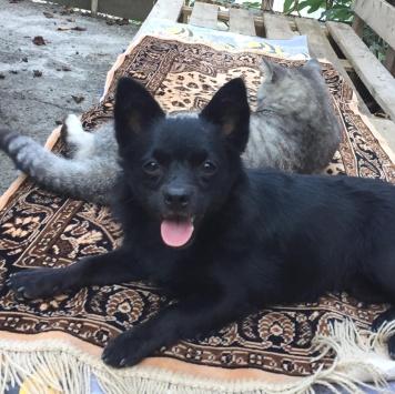 Бетти и Вегас - Собаки в добрые руки