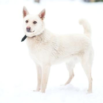 Бланш - Собаки в добрые руки