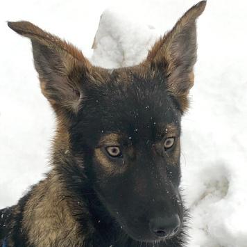 Моника - Собаки в добрые руки