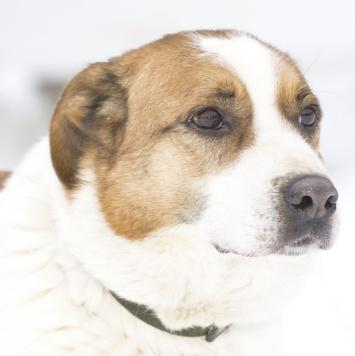 Артек - Собаки в добрые руки