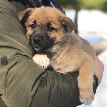 Рон - Собаки в добрые руки