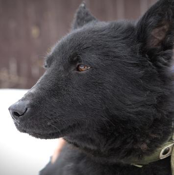 Тёма - Собаки в добрые руки