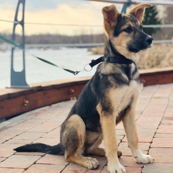 Джули - Собаки в добрые руки