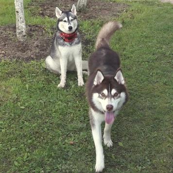 Валькирия и Денвер - Собаки в добрые руки