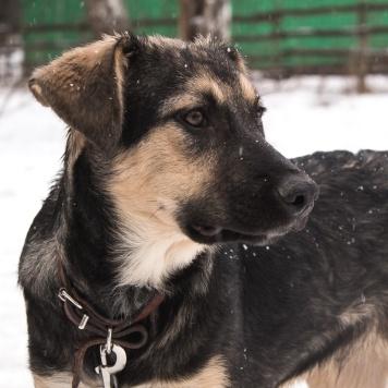 Щенок Филипп - Собаки в добрые руки