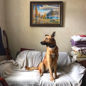 Акай - Собаки в добрые руки