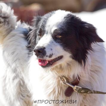 Рой - Найденные собаки