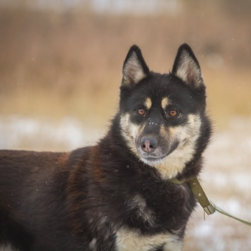Хася - Собаки в добрые руки