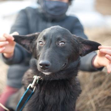 Урсик - Собаки в добрые руки