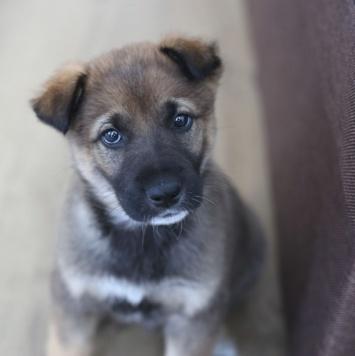 Бренди - Собаки в добрые руки