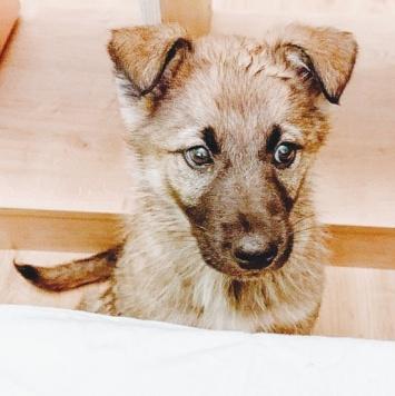 Кьянти - Собаки в добрые руки