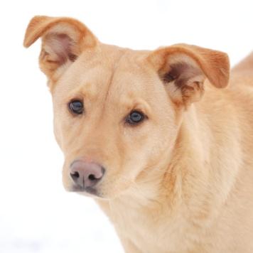 Абрау - Собаки в добрые руки